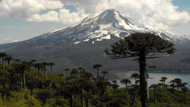 Photo of Parque Nacional Conguillio