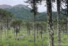 Photo of Reserva nacional China Muerta
