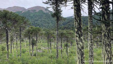 Photo of Reserva nacional China Muerta