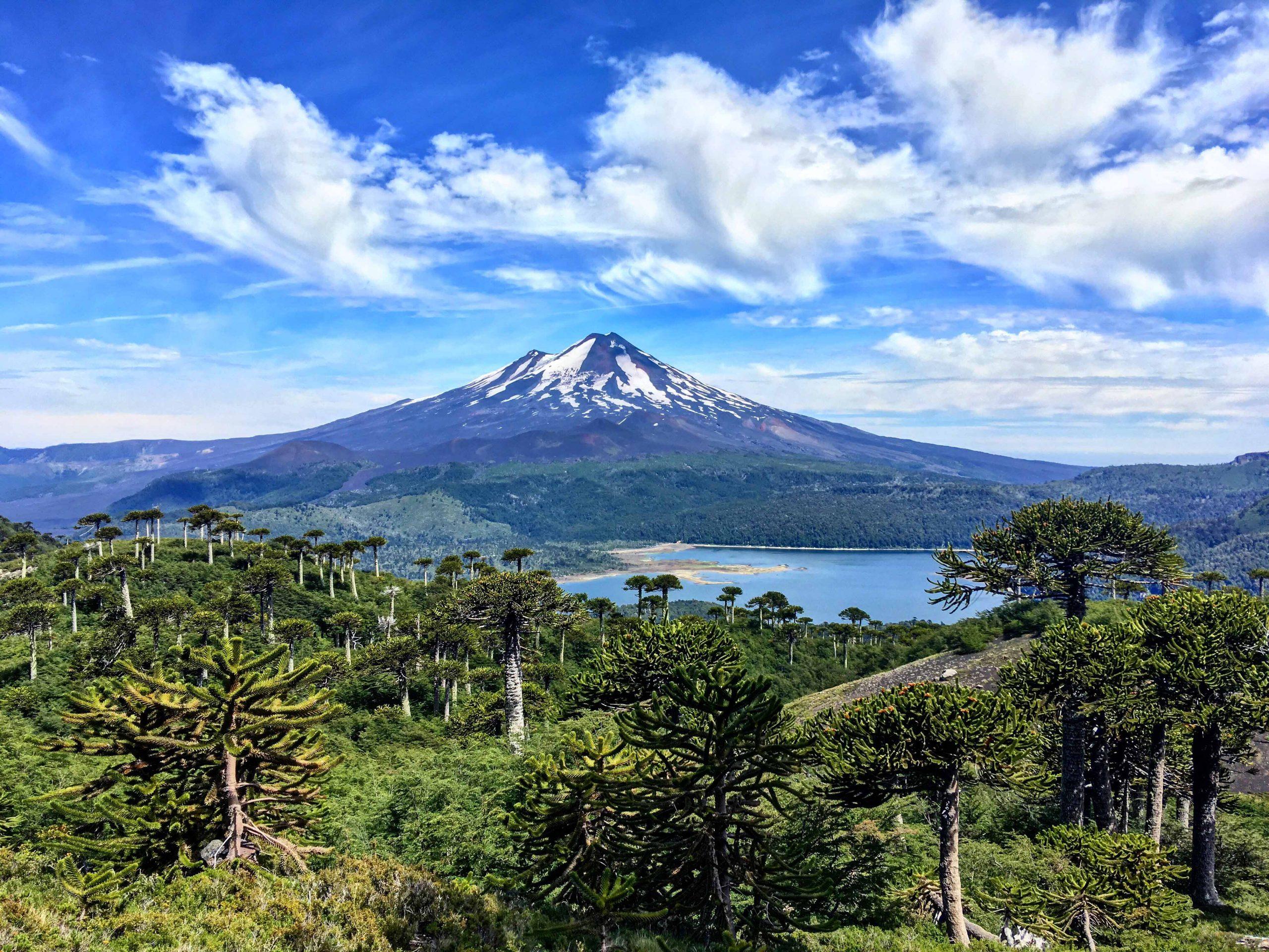Turismo Pewen Mapu